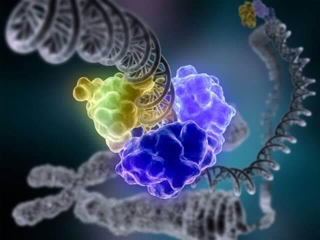 Виявлена хвороба шкіри, викликана мутацією батьківських генів