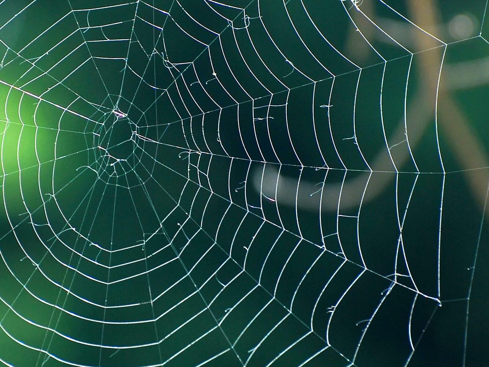 Павутина відновлює нервову тканину