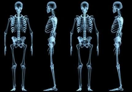 Як естроген взаємодіє з кістковою системою?
