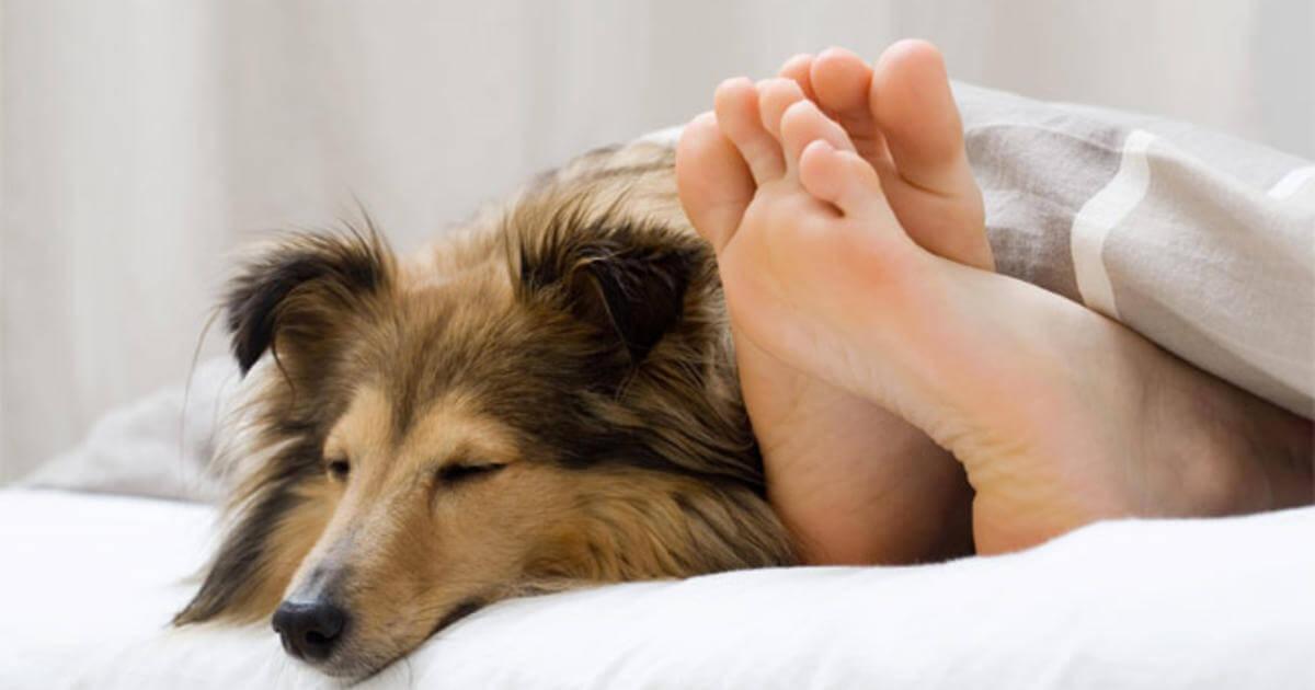 Чи варто пускати собаку на ліжко?
