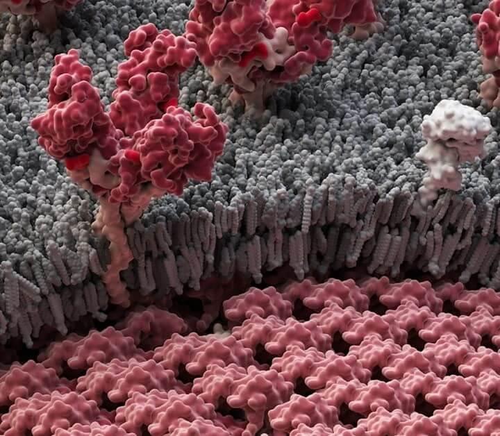 Розроблено новий метод діагностики лихоманки Ебола
