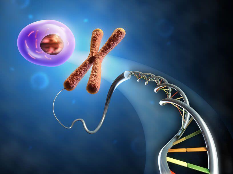 Дослідники прискорили перетворення стовбурових клітин в кардіоміоцити