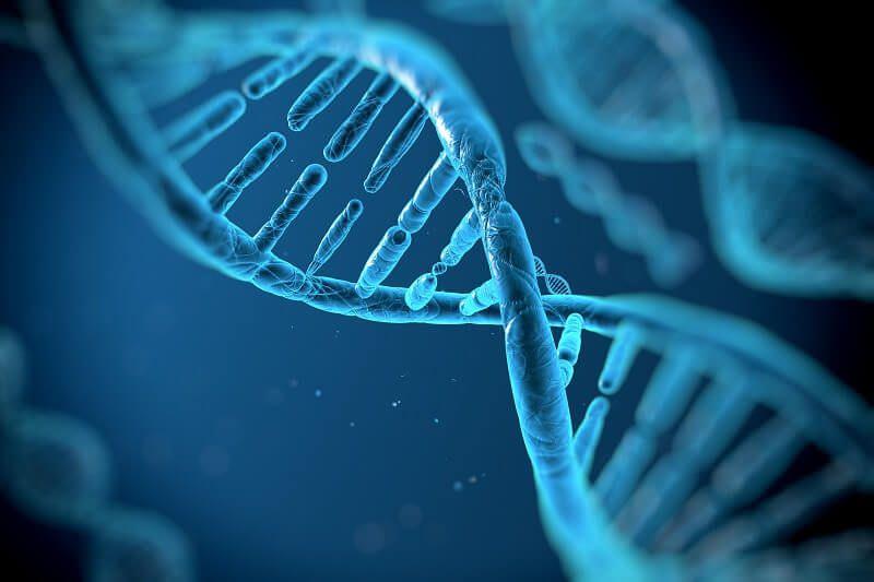 Підвищена експресія генів запобігає розвитку ожиріння