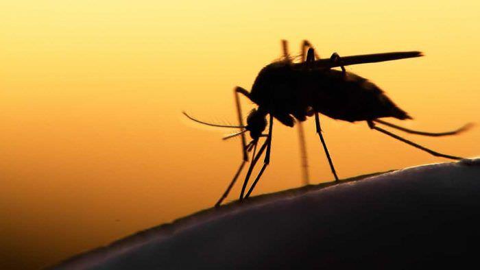 Малярія: причини, симптоми, діагностика, лікування, профілактика