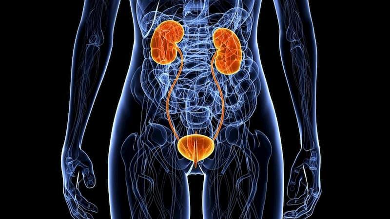 Рекомендации урологов для профилактики инфекций мочевыводящих путей