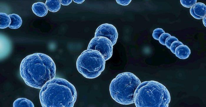 Что такое пробиотики и почему их важно употреблять