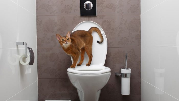 Як привчити кішку до унітаза?