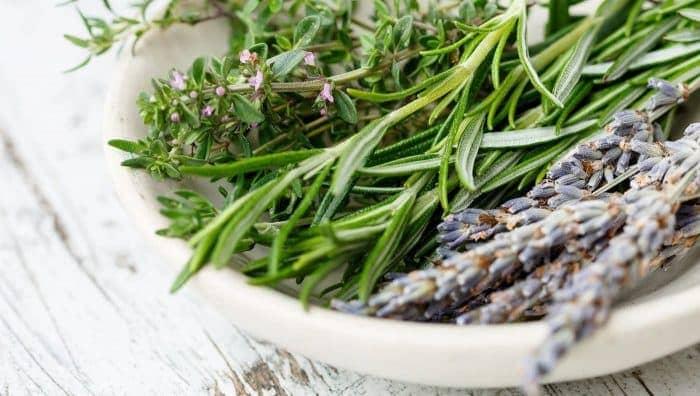 Від лука до розмарину: 10 корисних і смачних трав