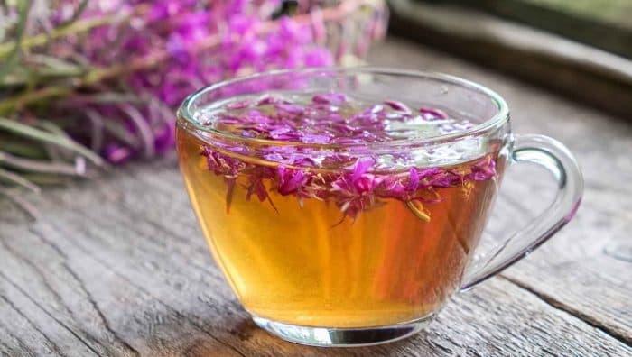 Іван-чай: користь і шкода, поради