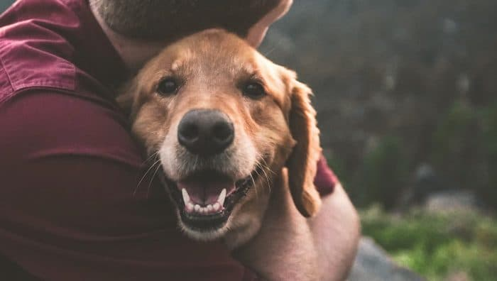 Каністерапія: як собаки впливають на здоров'я і як підібрати пса-помічника